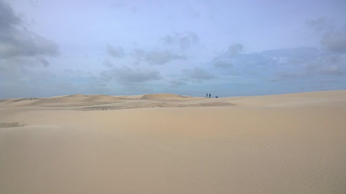 Råbjerg Mile - Danmarks vandrende skaldete ørkenbjerg