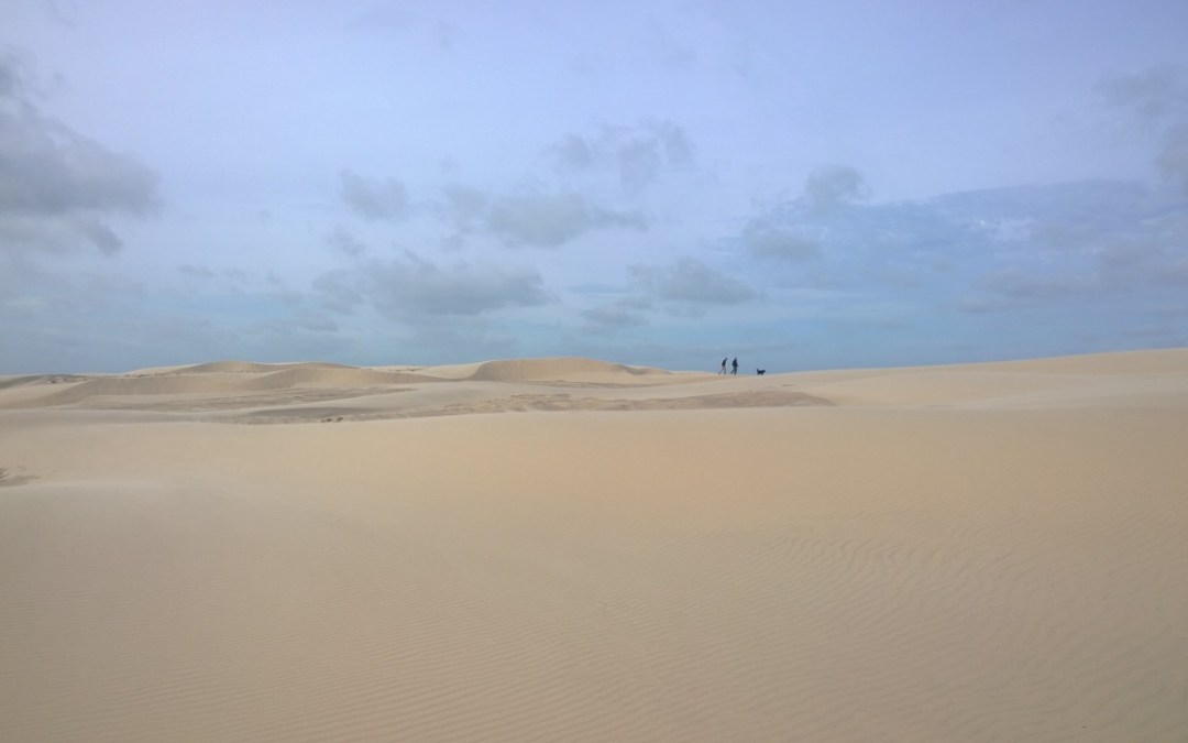 Råbjerg Mile – Danmarks vandrende skaldete ørkenbjerg