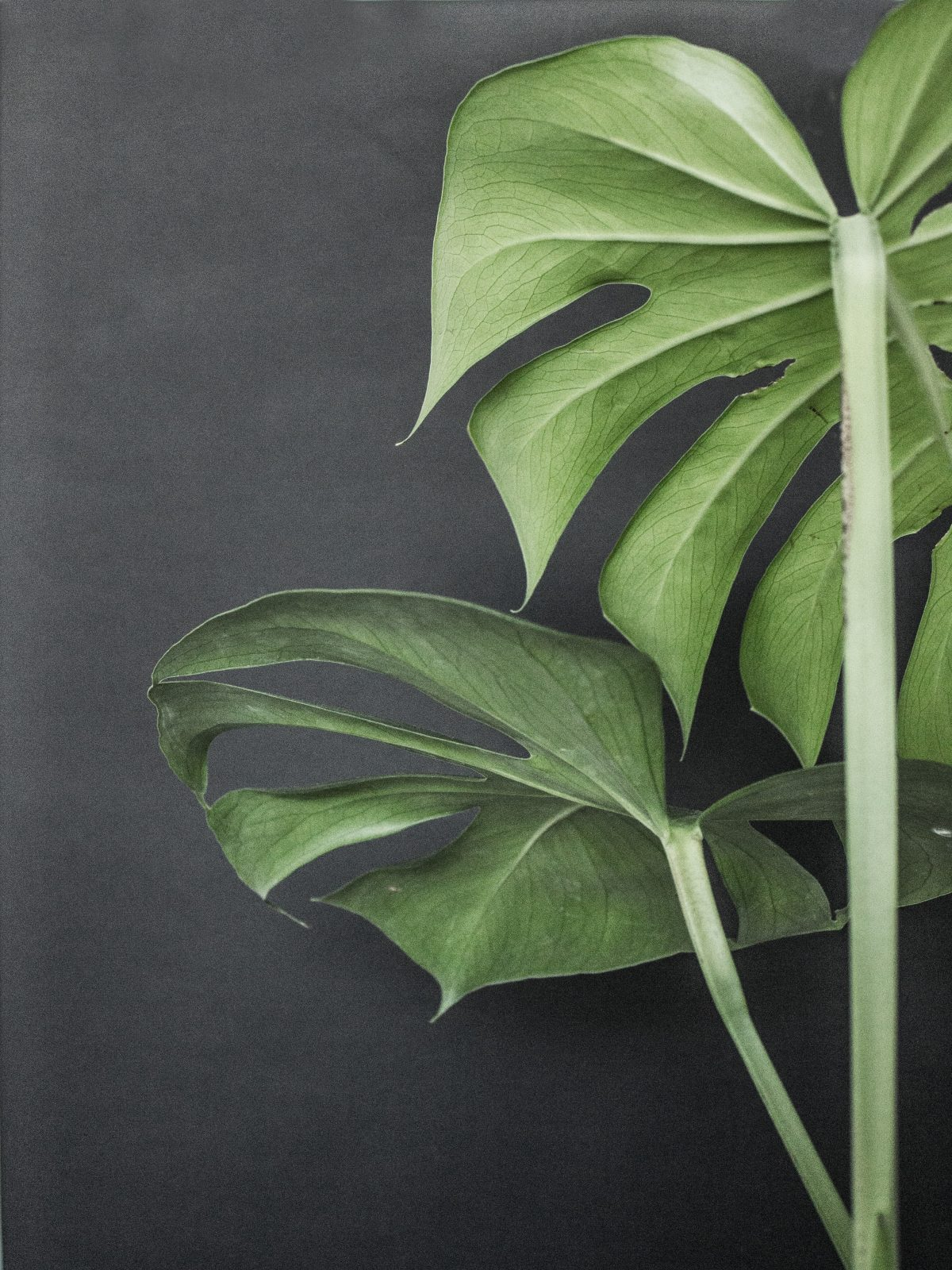 Indoor Plants For The Office 7 Splendid Reasons To Have Indoor Plants In Your Home And Office