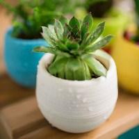 Mini Colorful Round Succulent Flower Pot Garden Office ...