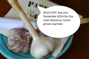 Buy Organic Garlic Here