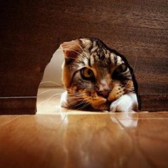 http://i0.wp.com/algodepsicologia.files.wordpress.com/2012/10/gato_curioso1.jpg?resize=240%2C240