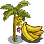 Banana Tree Regalo Monedas que produce: 56 Se vende por: 32