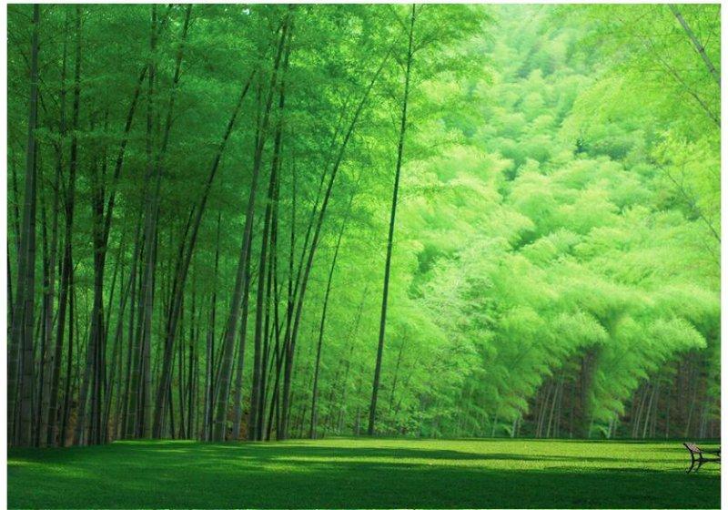 Wallpaper Dinding Pemandangan 3d Macam Macam Rumput Liar Hias Dilengkapi Gambar Rumput Hd