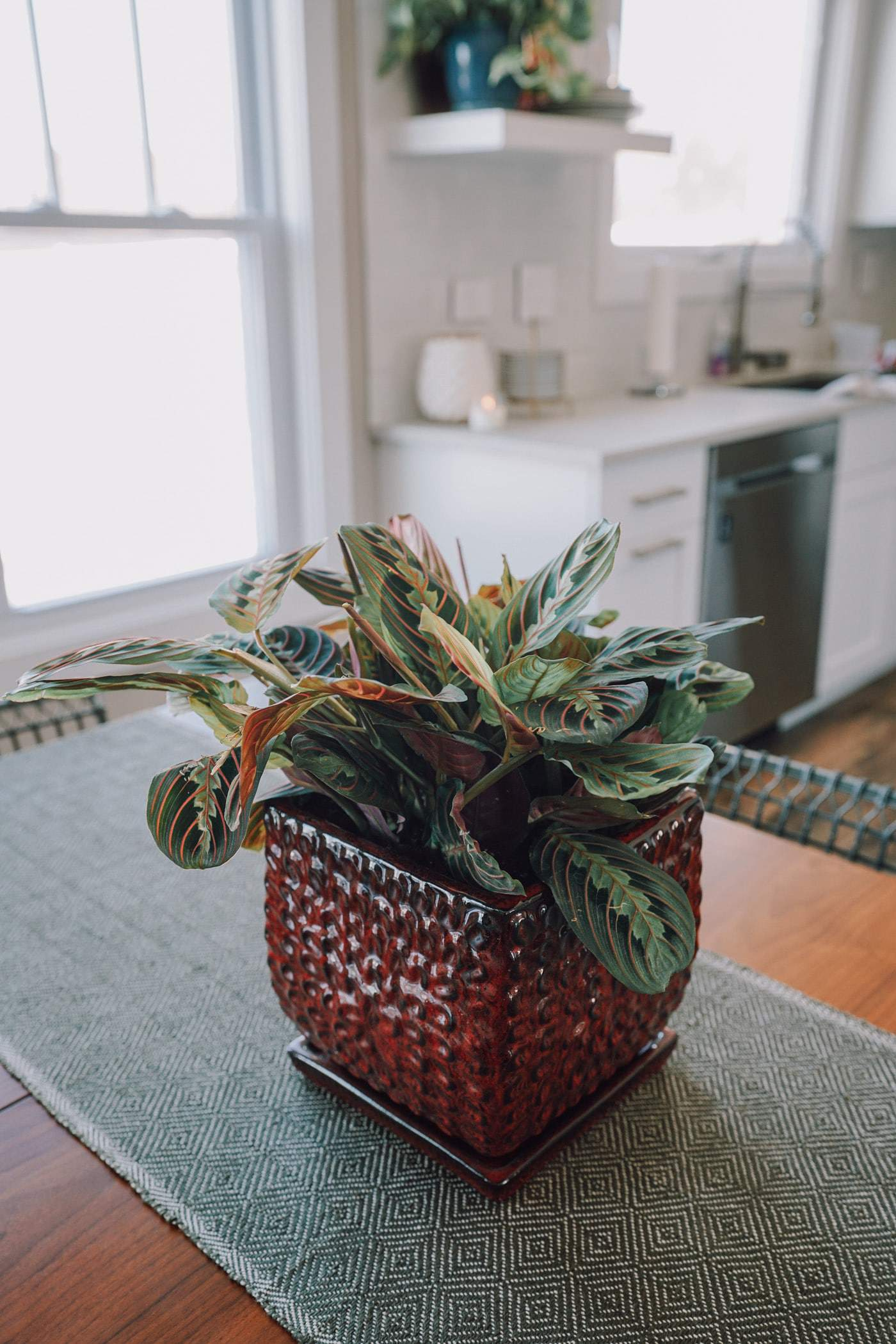Where To Buy Indoor Plants Online 13 Places To Buy Indoor Plants Online A Lily Love Affair