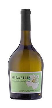 Mirabilis g
