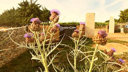 Vinhos biológicos da Quinta do Cardo 450