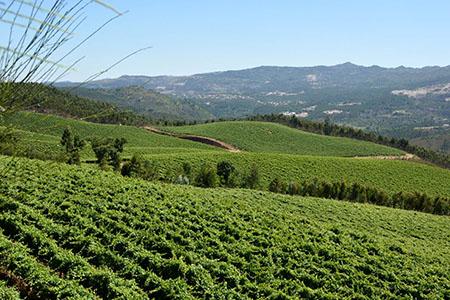 Região vinhos verdes vinha 450