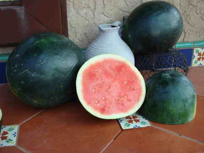 Large Of Moon And Stars Watermelon