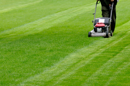 All About Landscaping Tips