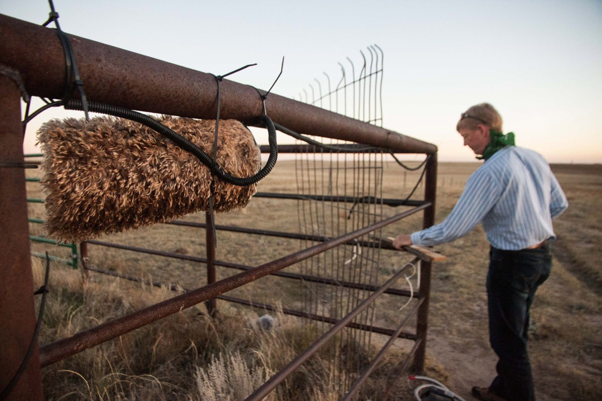 Kurt Fristrup repairs a damaged recording system on a cattle pen in Colorado's Pawnee National Grassland. Photo: Kerry Klein