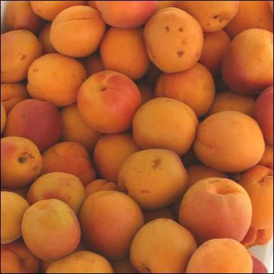 apricot allergy