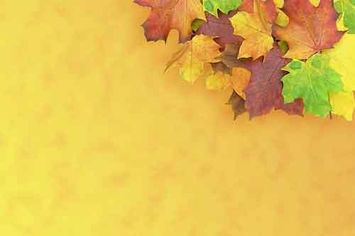 Fall Leaves Desktop Wallpaper Leaf Background 22 Free Textures For Fall Design Projects