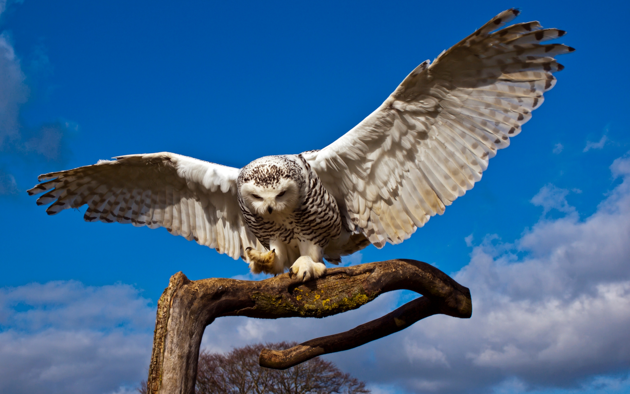Fall Wallpaper For Computer Screen Snowy Owl Beautiful Hd Beautiful Pictures All Hd Wallpapers