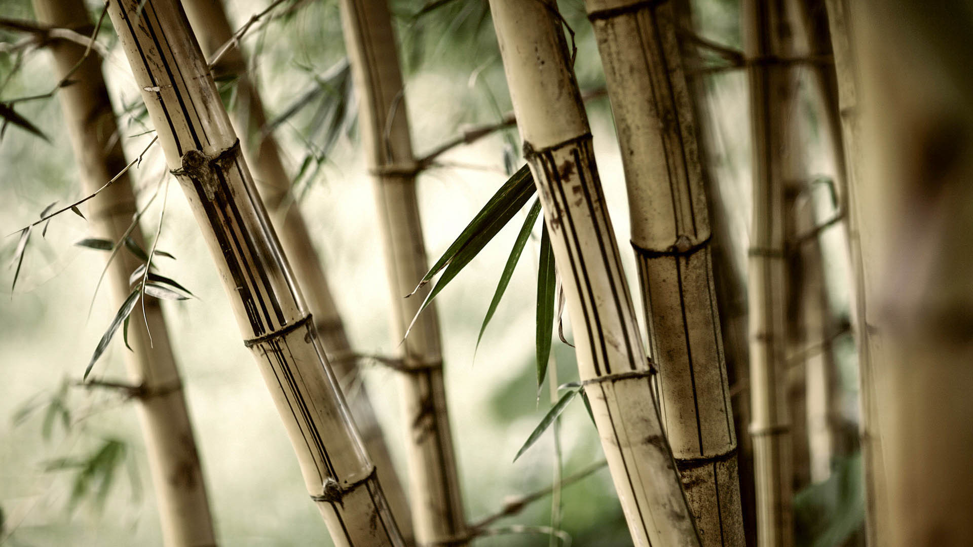 New 3d Wallpaper Free Download Bamboo New Hd Wallpapers 2015 High Quality All Hd