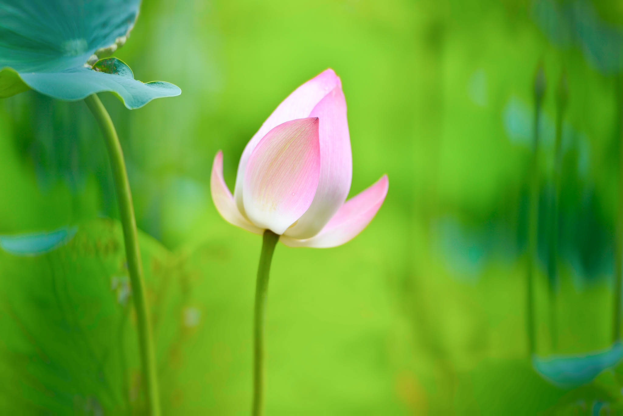 New Hollywood Movies Hd Wallpapers Lotus Flower Beautiful High Quality Hd Wallpapers All Hd
