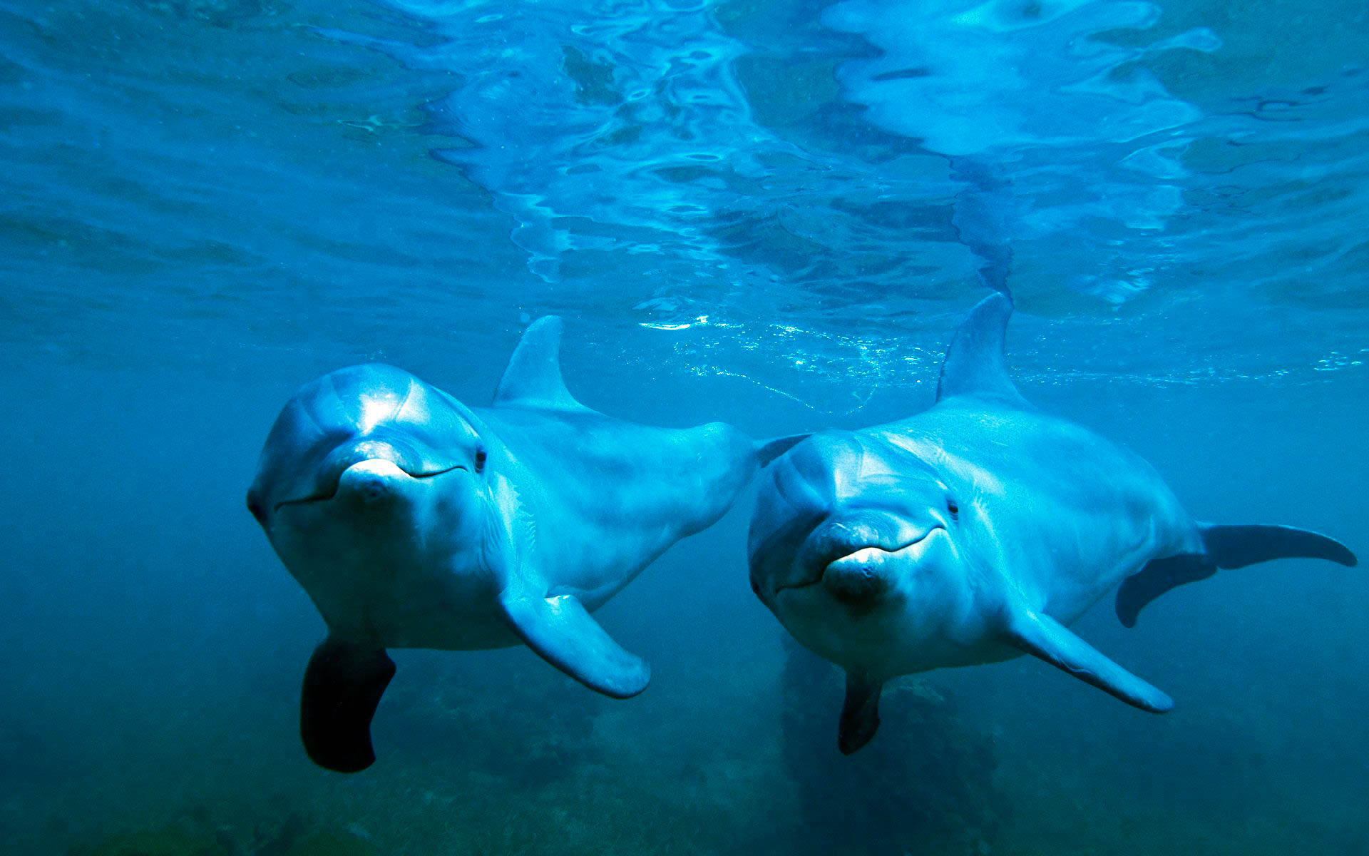 Cute Baby Girl Wallpaper For Desktop Full Screen Dolphin Awesome Hd Pictures Images Amp Backgrounds High