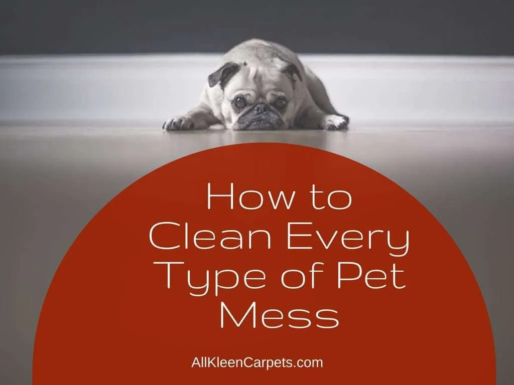 How To Easily Clean Up Pet Messes Homemade Pet Odor
