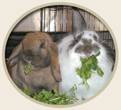 Homemade Rabbit Treat Supplement