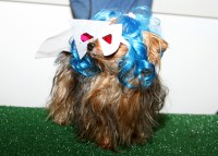 Dog Costume Favorites From Muttropolis Howl-O-Ween Pawty ...