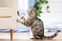 cat scratching furniture - All Pet News
