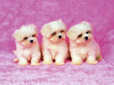 37 Cute Stuff Wallpapers - Puppies in Pink - HD Wallpapers | Wallpapers Download | High ...