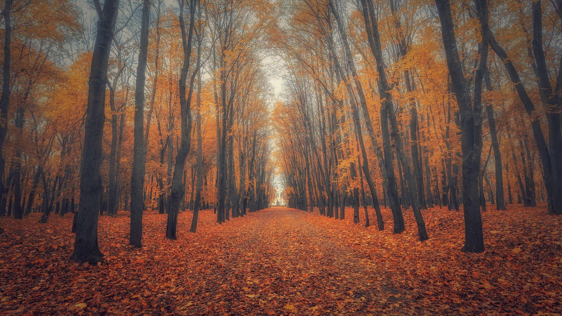 Big Size Wallpapers With Quotes Beautiful Nature Wallpaper Big Size 17 With Autumn Forest