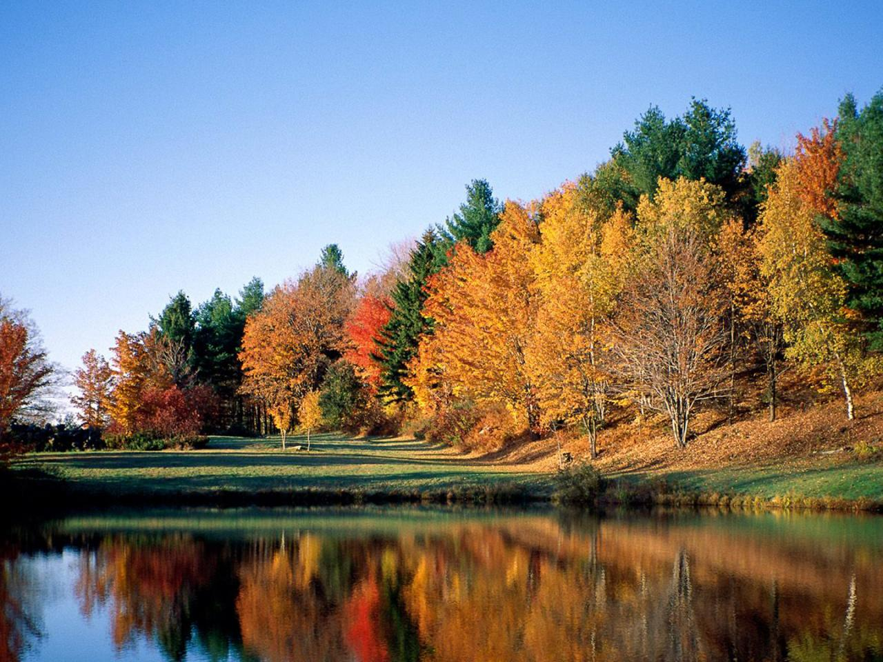 Fall Leaves Hd Wallpapers 1080p Hd Wallpapers 1080p The Most Favorite Wallpaper Hd