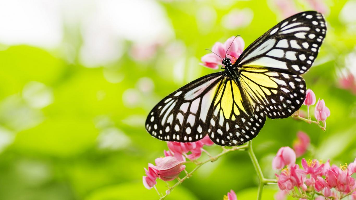 Beautiful Pictures Of Flowers And Butterflies Birds Pictures Of Flowers And Butterflies In Hd For Desktop