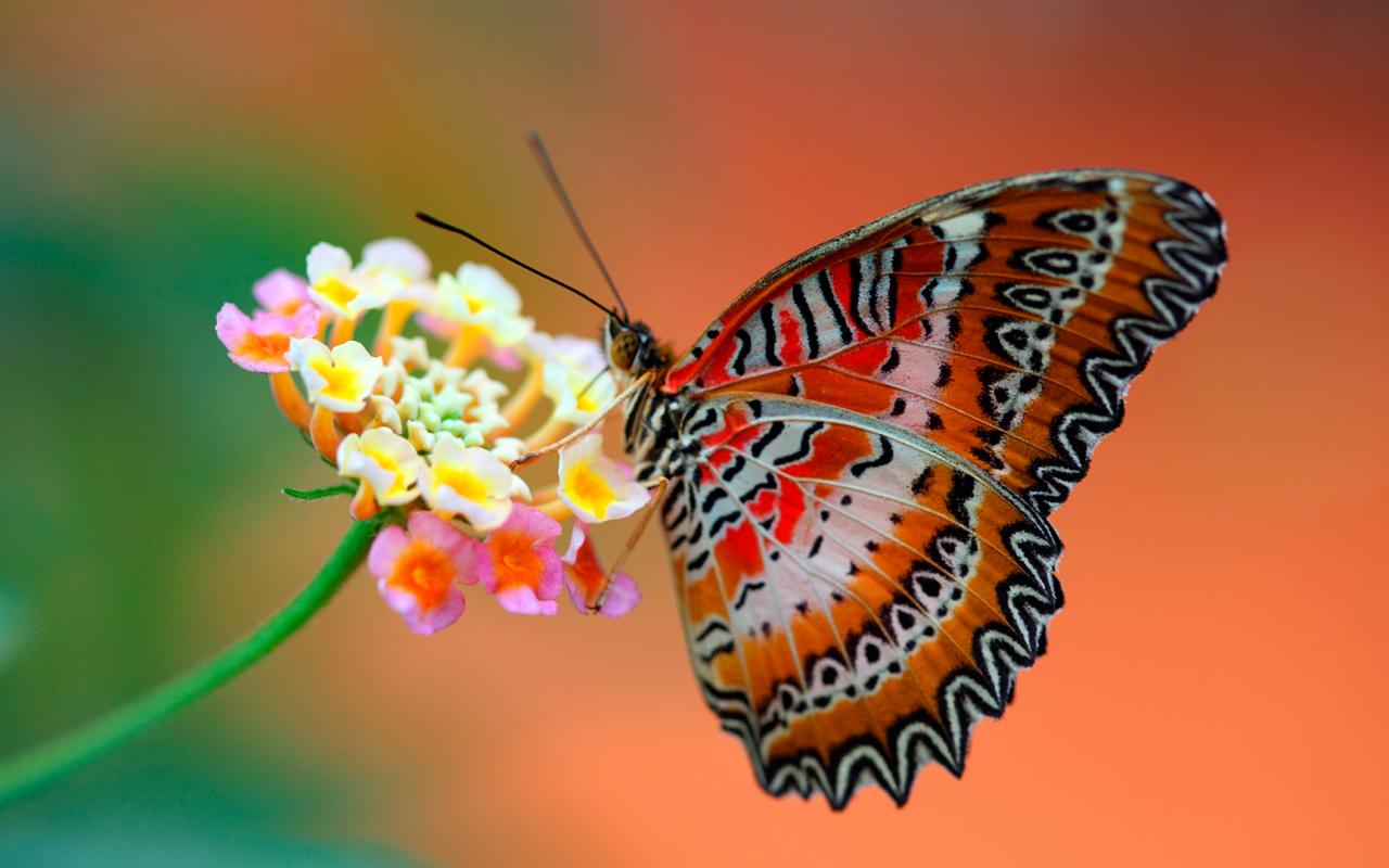 Animated Hd Wallpapers 1080p Free Download Close Up Picture Of Butterfly On Flower For Wallpaper Hd