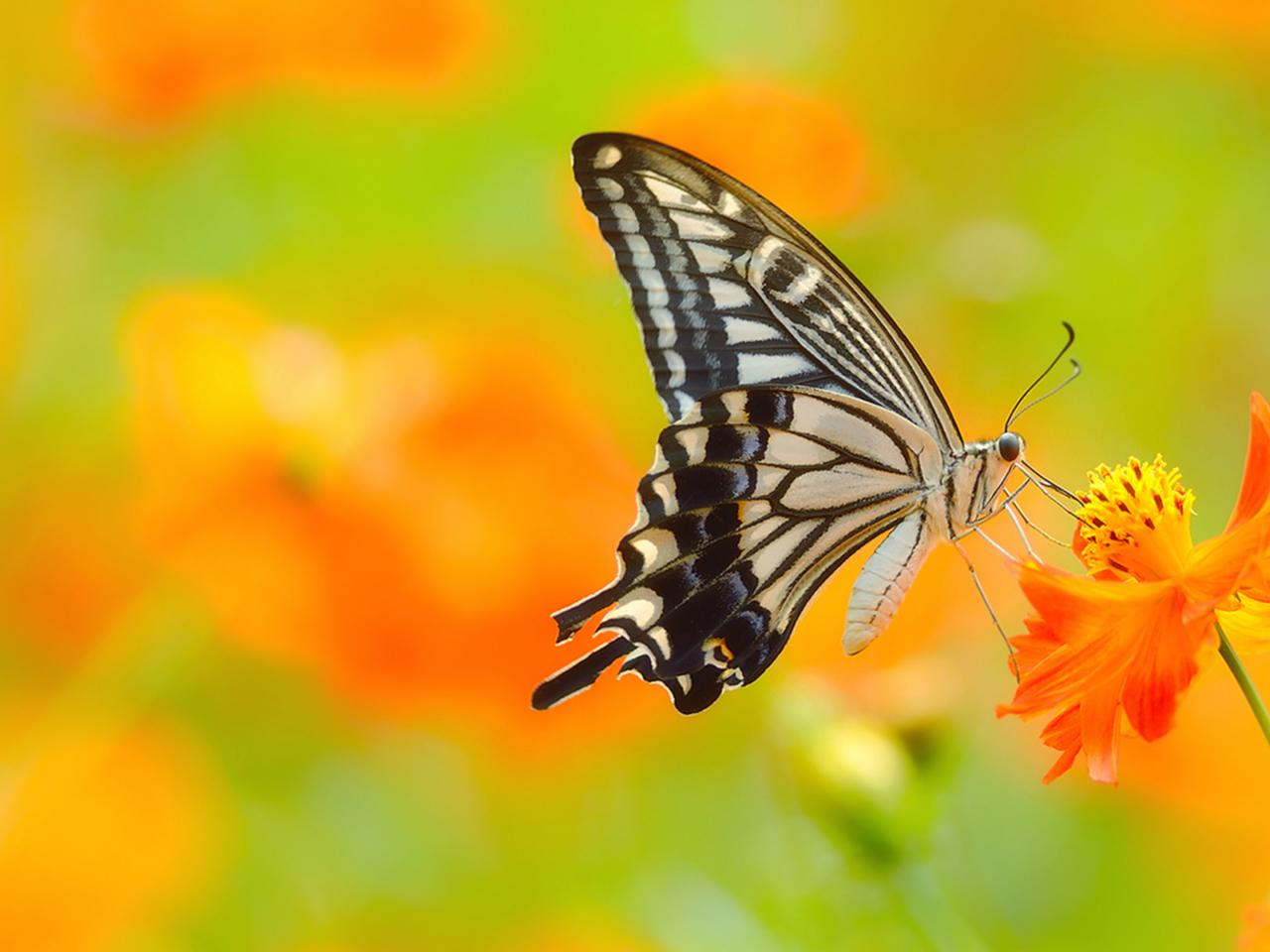 3d Motivational Wallpapers Picture Of Butterfly On Flower In 4k Ultra Hd Resolution