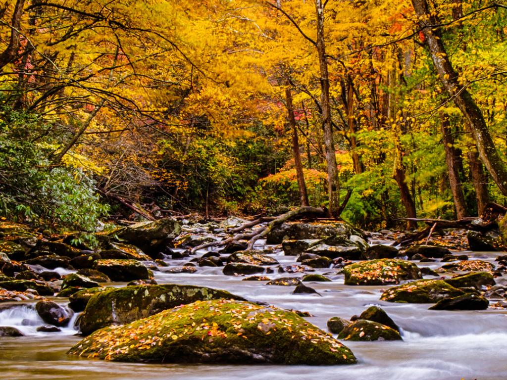 Motivational Quotes Wallpapers Hd For Mobile Nature Picture Of Autumn Forest In The Great Smoky