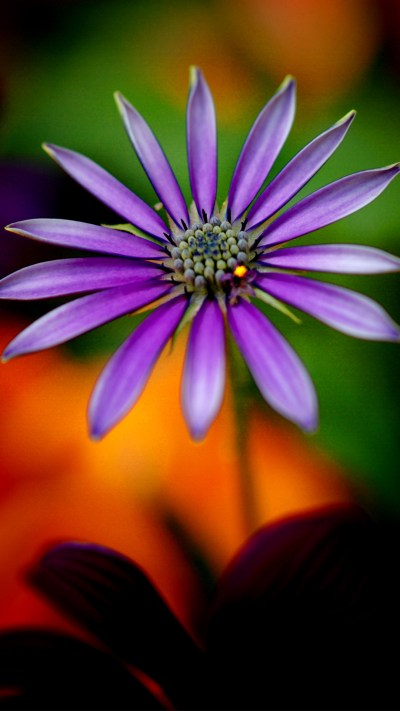 Full HD Wallpapers 1080p for Mobile with Purple Flower - HD Wallpapers | Wallpapers Download ...