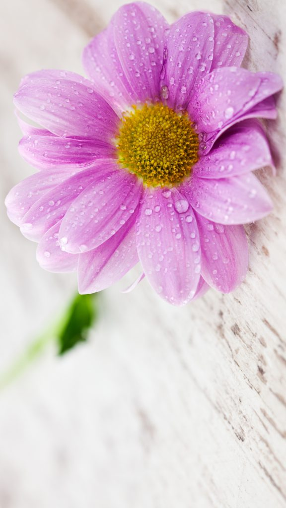 How To Make Wallpaper Fit On Iphone 6 Flower Wallpapers For Mobile Phones With 1440x2560 And 5