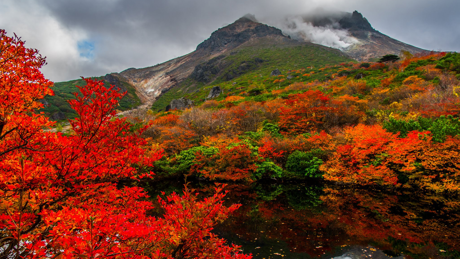 Fall Forest Hd Wallpaper Nature Images Hd Autumn In Nasudake Japan Hd