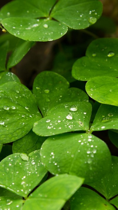 Dropped Water on Leaves for iPhone 7 Wallpaper - HD Wallpapers | Wallpapers Download | High ...
