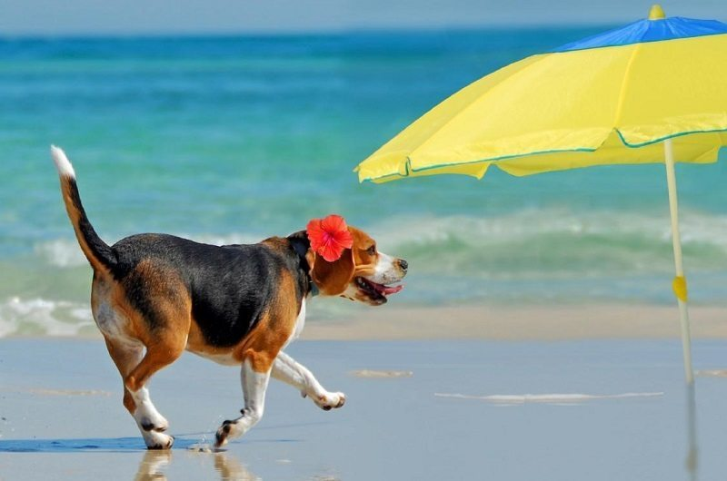 Cute Silly Wallpapers 20 Animals On The Beach Who Love Summer More Than You