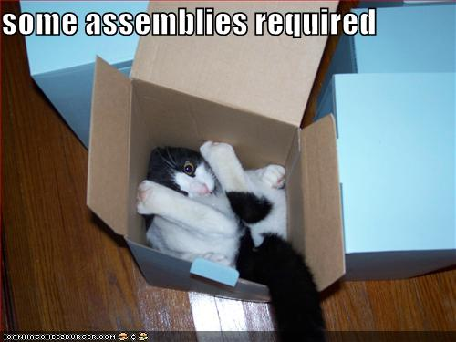 funny-pictures-cat-in-box-assembly-required