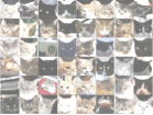 "The Stanford-Google paper identifies these pictures as ""the most responsive stimuli on the test set for the cat neuron."""