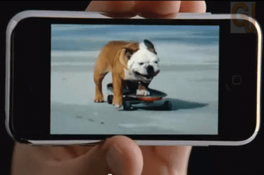 dog skateboard apple youtube