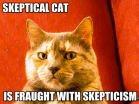 skeptical_cat