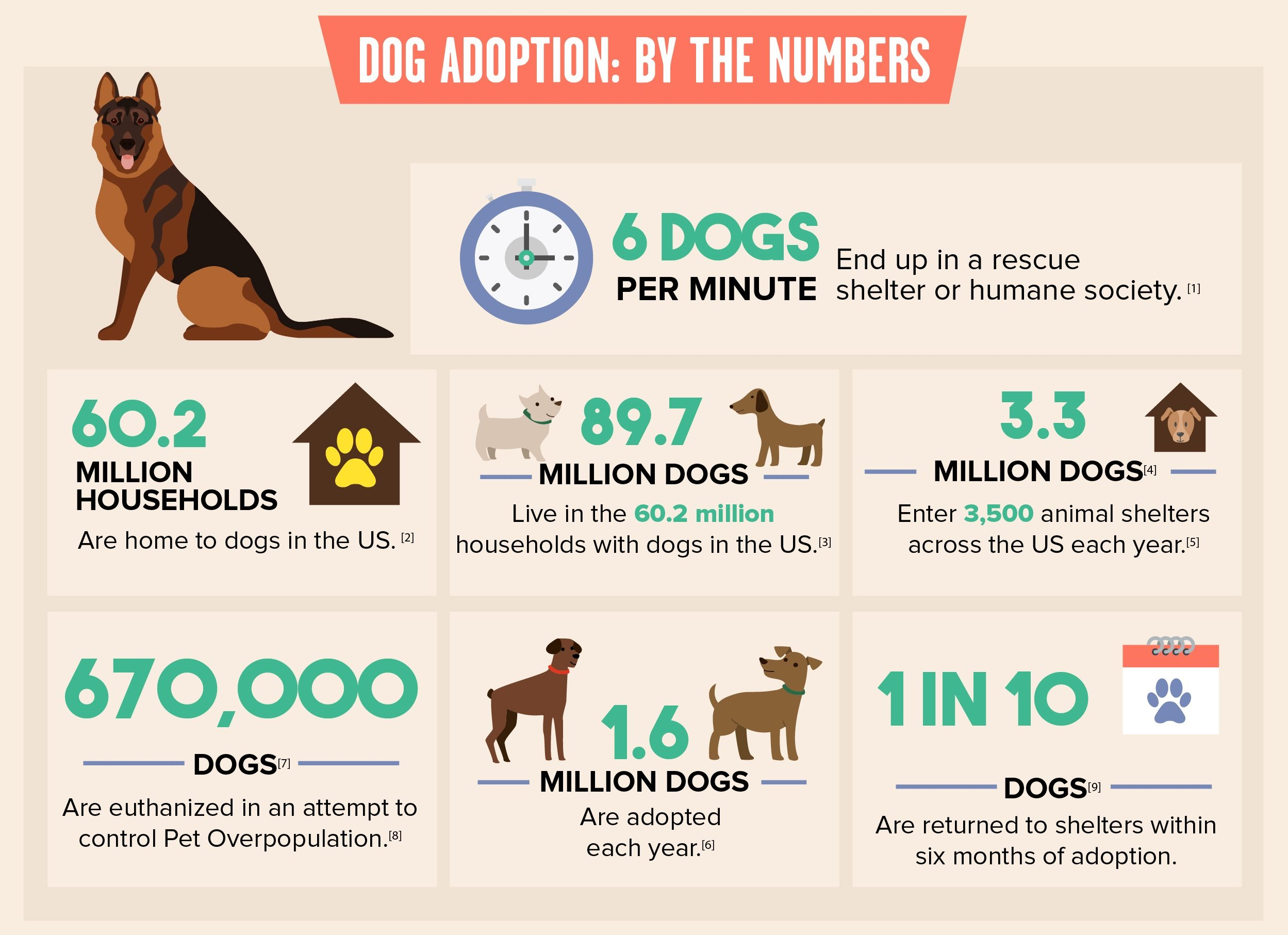 Rescue Dogs Puppies For Adoption 14 Dog Shelters Speak Out What You Should Know Before Adopting A
