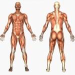 Ten Useless Human Body Parts