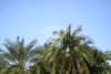 palm-tree-summer-stock-photo-horizontal-preview