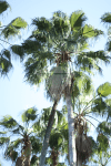 palm-tree-summer-vertical-preview