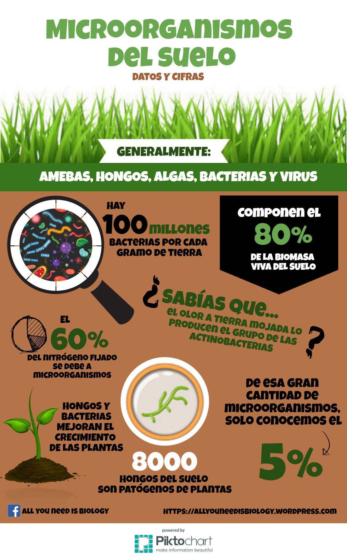 Microbiologia Del Suelo Infografía Microorganismos Del Suelo All You Need Is