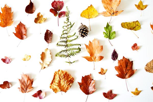 todas-las-hojas
