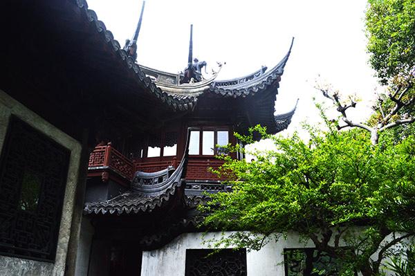 tejado-arbol