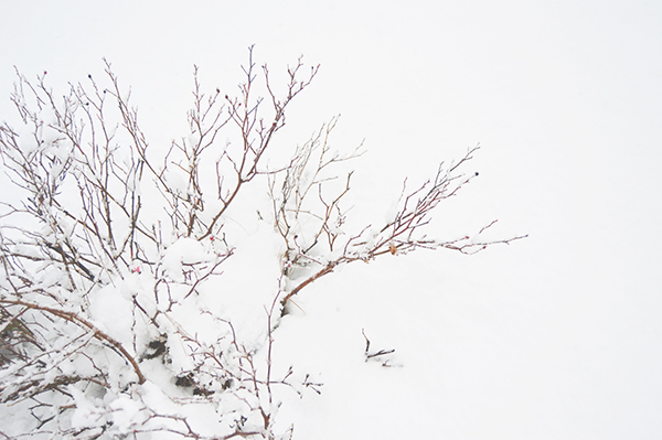All_Your_Sites_Snow_2