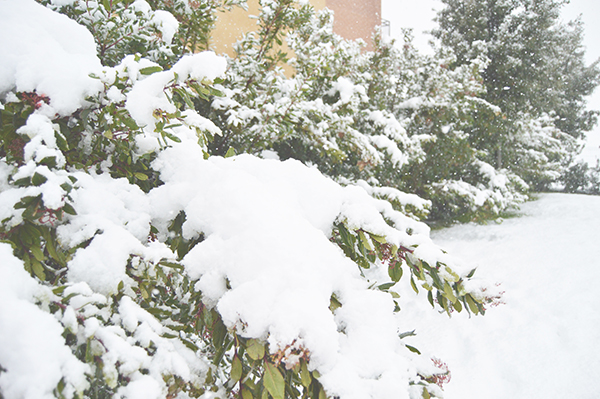 All_Your_Sites_Snow_5